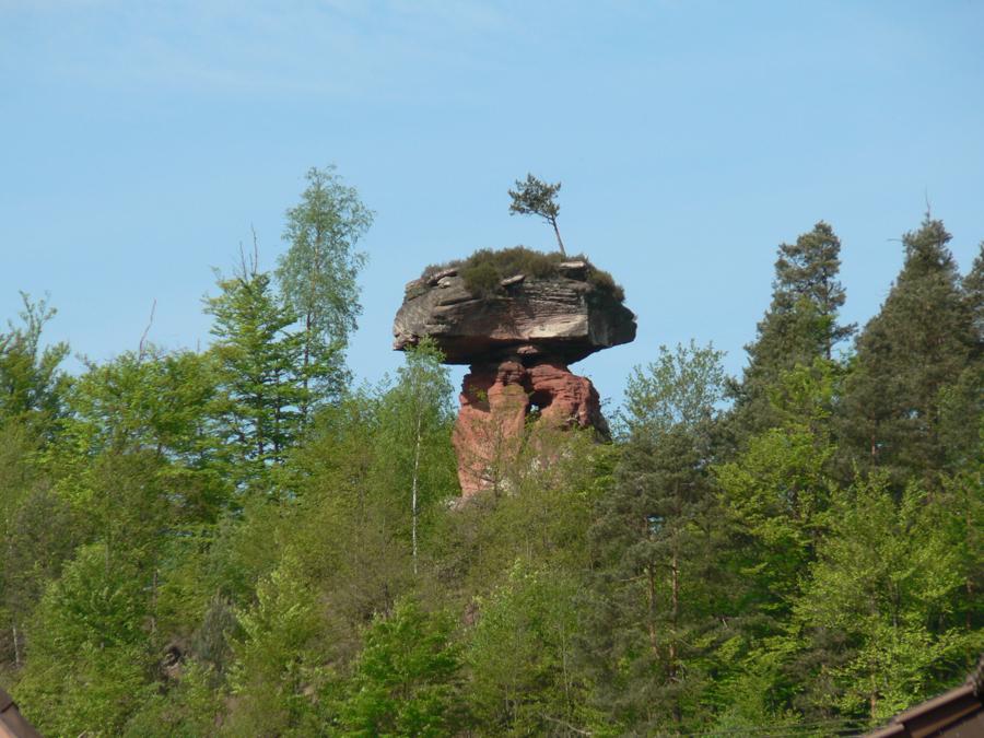 2012.05.11-AGS Wanderung Dahner-Felsenland-[P1160074]-Nr.003