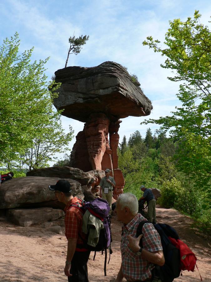 2012.05.11-AGS Wanderung Dahner-Felsenland-[P1160078]-Nr.006