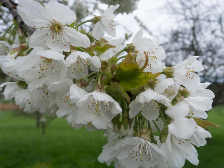 20160416-AGS-Blütenwanderung2016-[DSCN2246]-Nr.0023